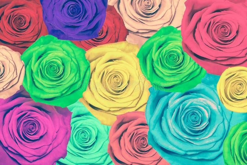 färgrika ro för bakgrund arkivfoton