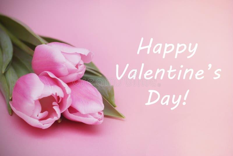 Färgrika rosa färger, fucsia Valentine' hälsning för s-dagbakgrund Rosa tulpanblommor på rosa bakgrund Lycklig valentine arkivfoton