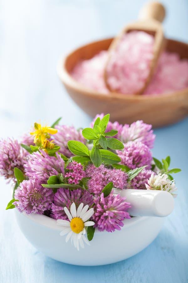 Färgrika salta läkarundersökningblommor och örter i mortel och rosa färger royaltyfria foton