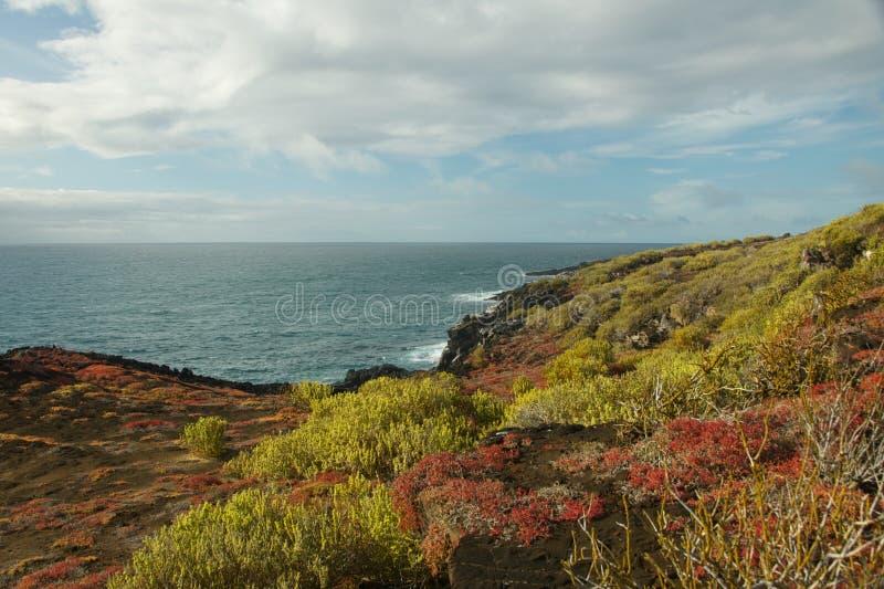 Färgrika Sesuvium på Punta Pitt i San Cristobal Island royaltyfri bild
