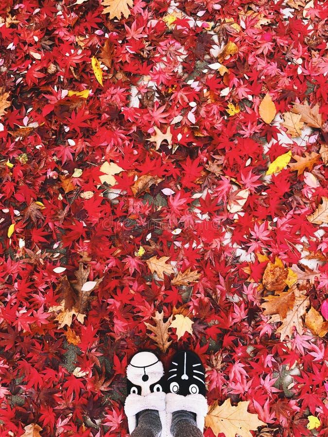 Färgrika sidor för lönnträd och ekavverkar på jordningen i nedgången royaltyfria bilder