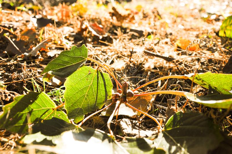Färgrika sidor i höst på jordningen fotografering för bildbyråer