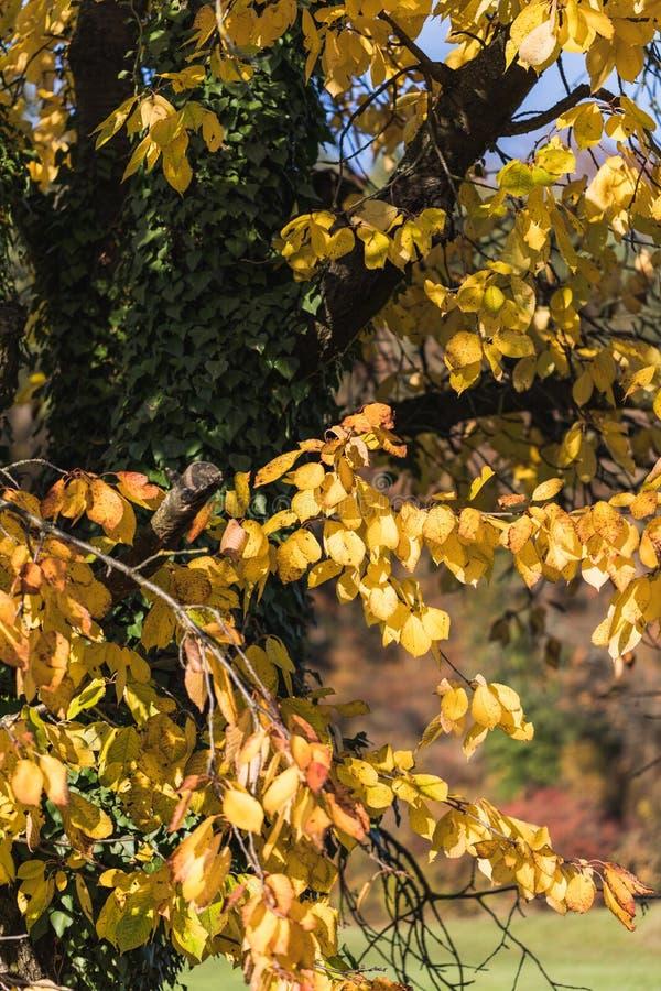 Färgrika sidor och träd i hösten i parkerar, Schweiz arkivbild