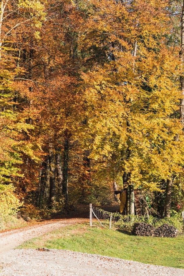 Färgrika sidor och träd i hösten i parkerar, Schweiz royaltyfria bilder