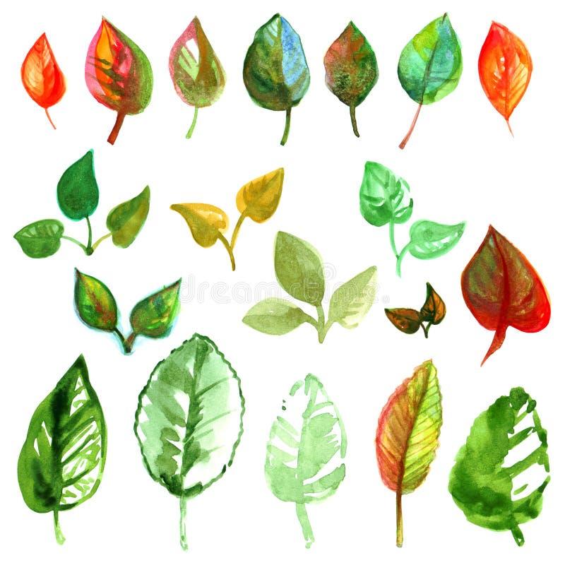 Färgrika skuggor för variationer för teckningar för målarfärg för träd för sommarhöstsidor av vattenfärgen som isolerades på vit  royaltyfri illustrationer