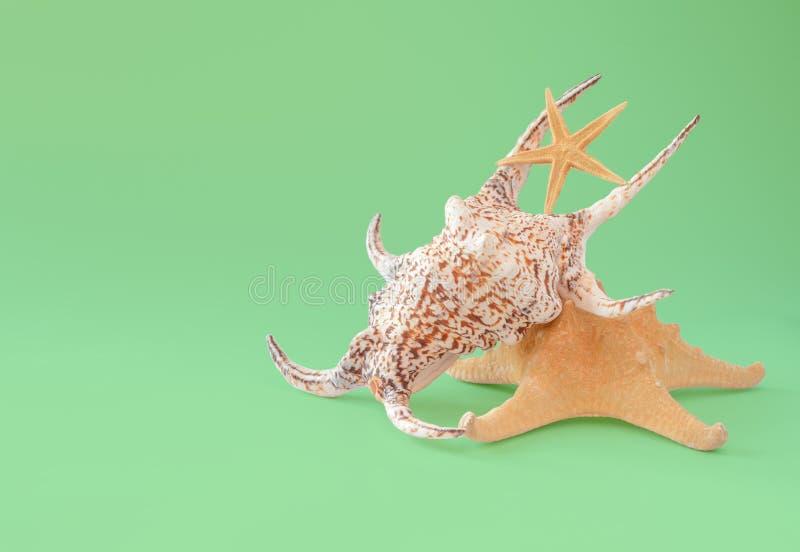 Färgrika snäckskal och sjöstjärna som isoleras på gräsplan fotografering för bildbyråer