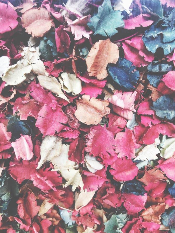 Färgrika torkade blommor som bakgrund royaltyfria bilder