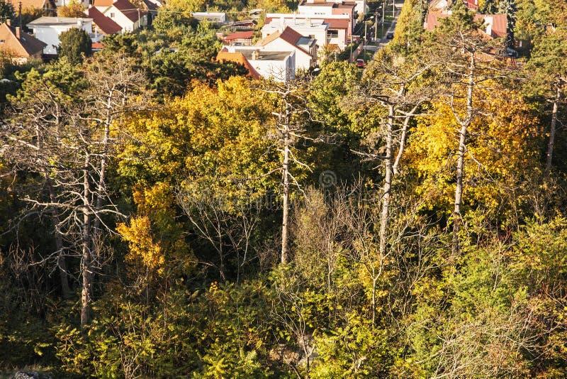 Färgrika träd för höst och familjhus fotografering för bildbyråer