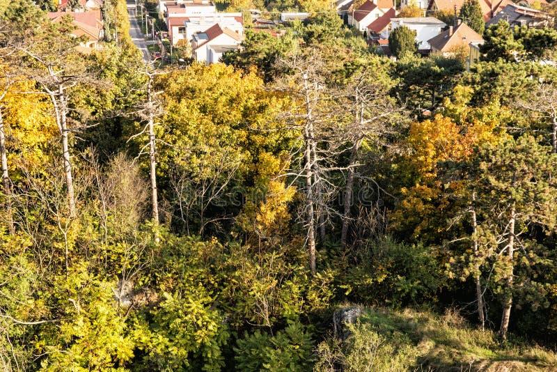 Färgrika träd för höst och familjhus i by arkivbilder