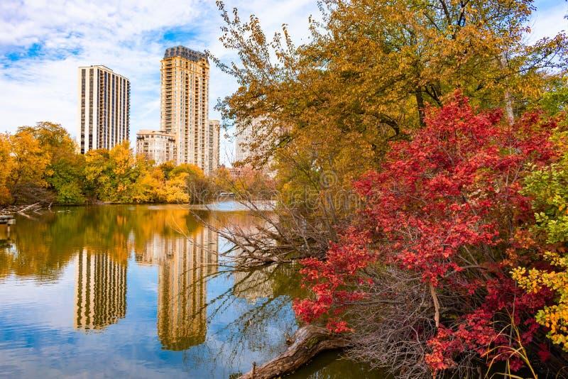 Färgrika träd och växter som omger det norr dammet i Lincoln Park Chicago under höst arkivbilder