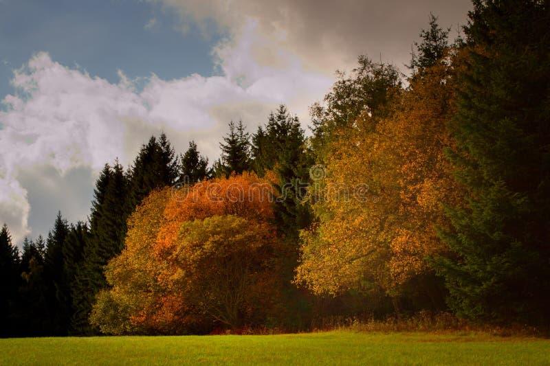 färgrika trees fotografering för bildbyråer