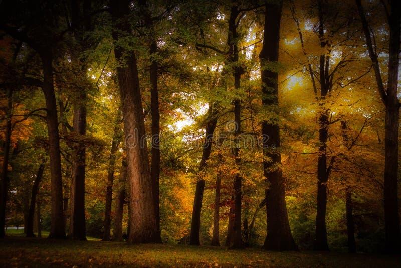färgrika trees för höst arkivbilder