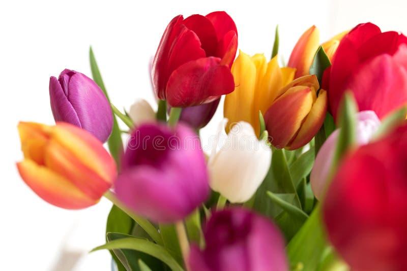 Färgrika tulpan för moderdag royaltyfria foton