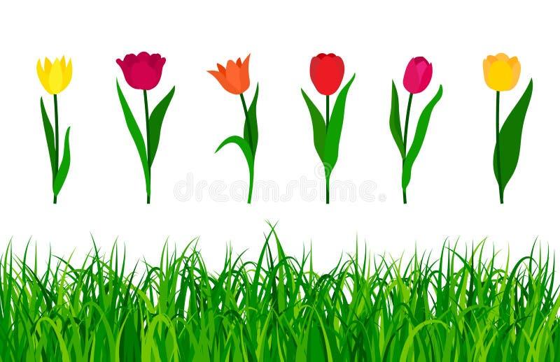 Färgrika tulpan med grönt gräs som isoleras på vit bakgrund ocks? vektor f?r coreldrawillustration royaltyfri illustrationer