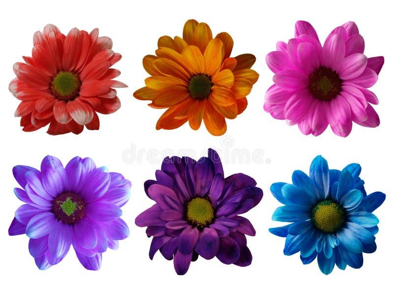 färgrika tusenskönor för samling arkivbild
