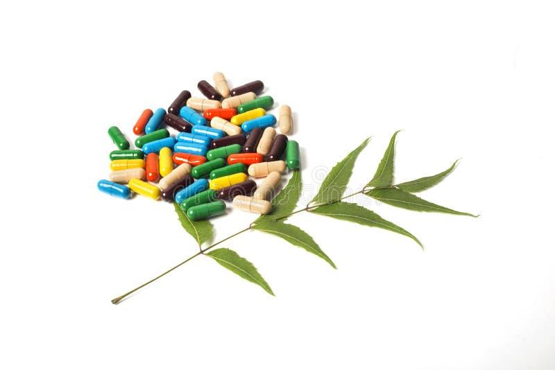 Färgrika växt- minnestavlor och neemblad arkivfoton