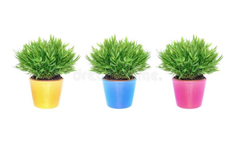 färgrika växtkrukar arkivfoto