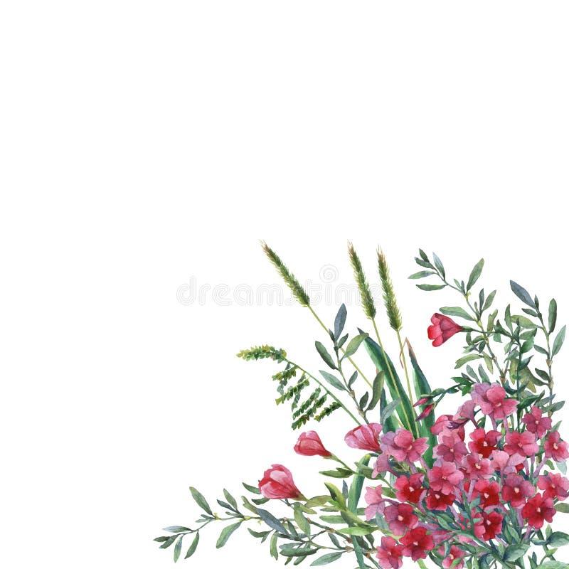 Färgrika vårblommor och gräs på en äng royaltyfri illustrationer