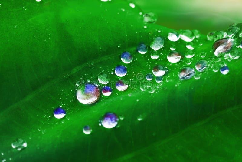 Färgrika vattendroppar på sidor royaltyfria foton