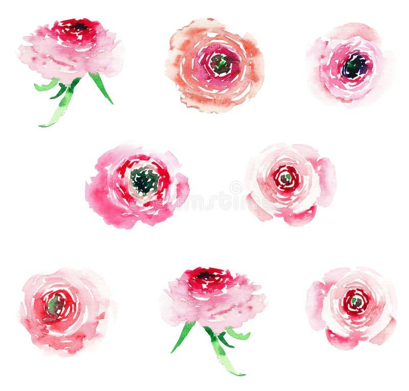 Färgrika vildblommarosor för mjuk elegant sofistikerad underbar älskvärd blom- växt- vår med knoppgruppen royaltyfri illustrationer