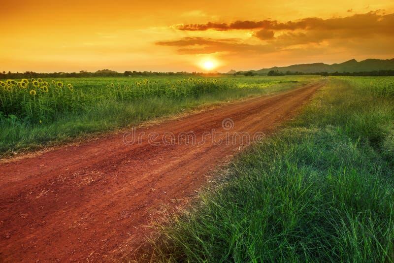Färgrikt av solnedgånghimmel i Thailand det lantliga fältet arkivbilder
