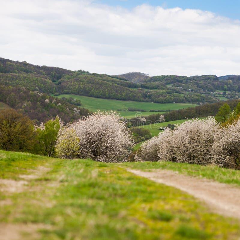Färgrikt berglandskap av slovakiska Carpathians arkivfoto
