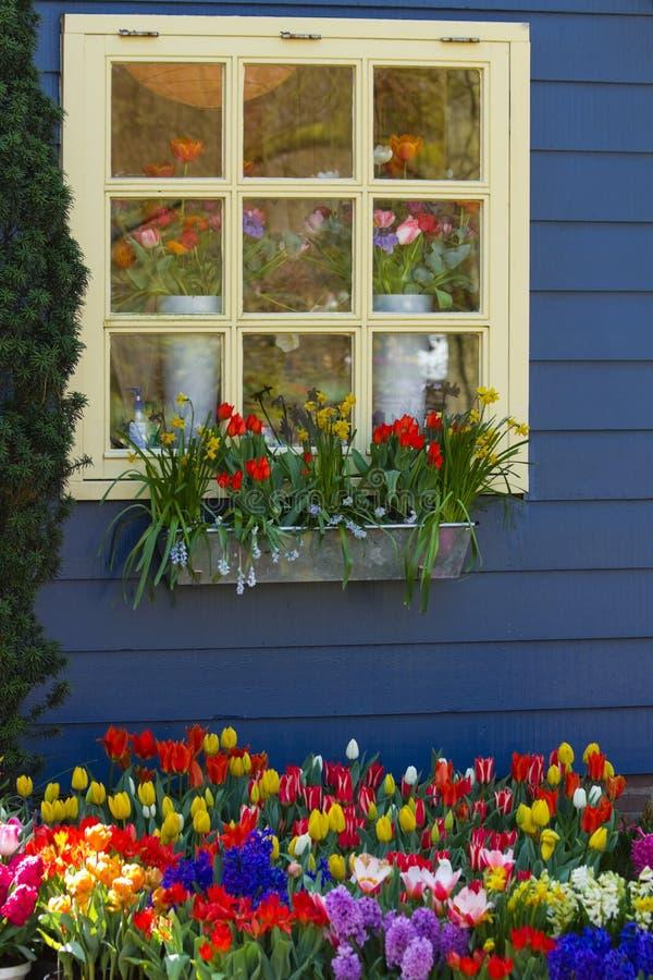 färgrikt blommafjäderfönster arkivfoto