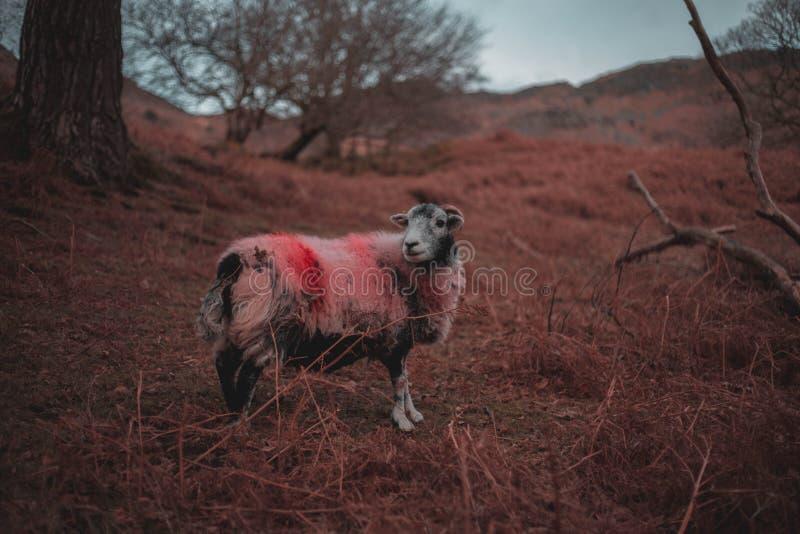Färgrikt brett RAManseende i ett stort fält arkivfoton