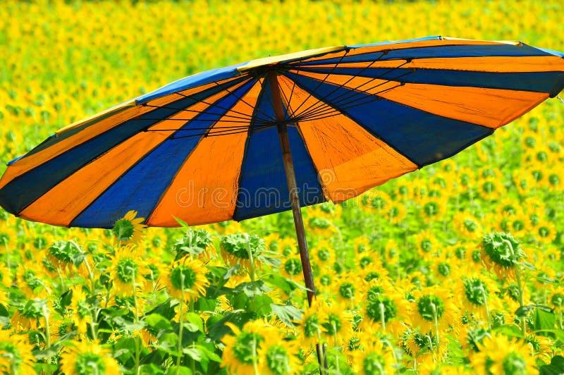 färgrikt fältsolrosparaply royaltyfri foto