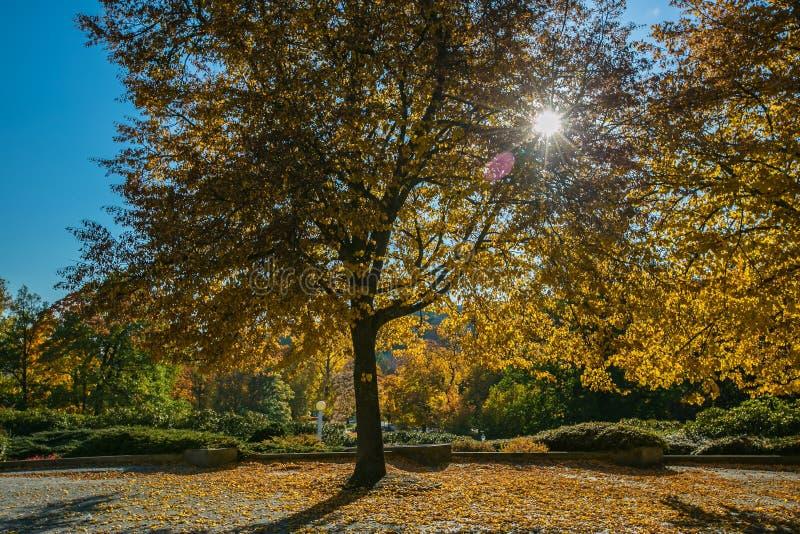 Färgrikt höstlandskap med gula och orange sidor för träd, arkivfoto