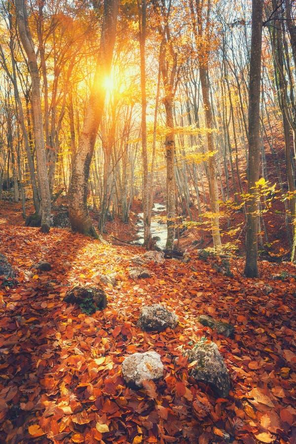 Färgrikt höstlandskap med träd och apelsinsidor Berg arkivbild
