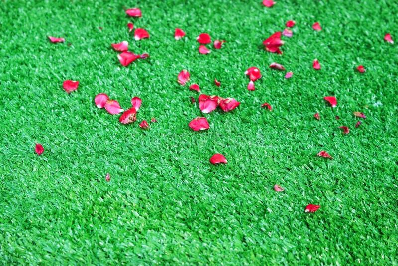 Färgrikt kronblad av röda rosa blommor på konstgjort grönt gräs för bakgrund fotografering för bildbyråer