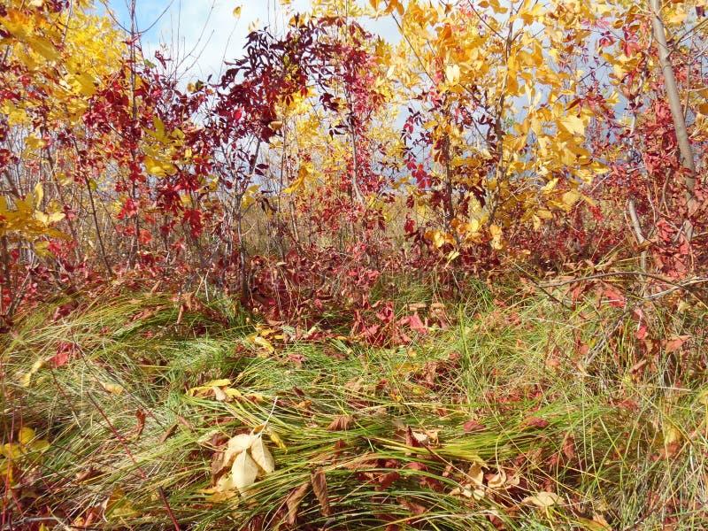 Färgrikt landskap för höst arkivbilder