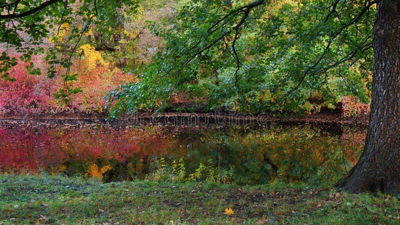 Färgrikt landskap för höst med ljusa busketräd och ett damm royaltyfri fotografi