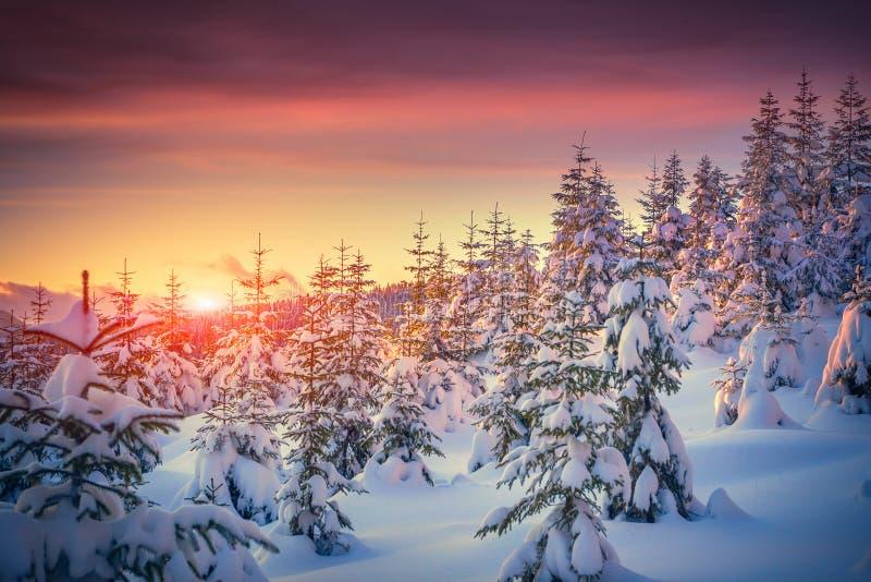 Färgrikt landskap på vintersoluppgången i bergskog royaltyfri fotografi