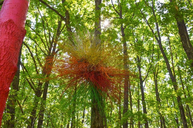 Färgrikt rede på det målade trädet i den färgrika skogen eller Padurea Colorata från Poienari, Rumänien arkivfoto