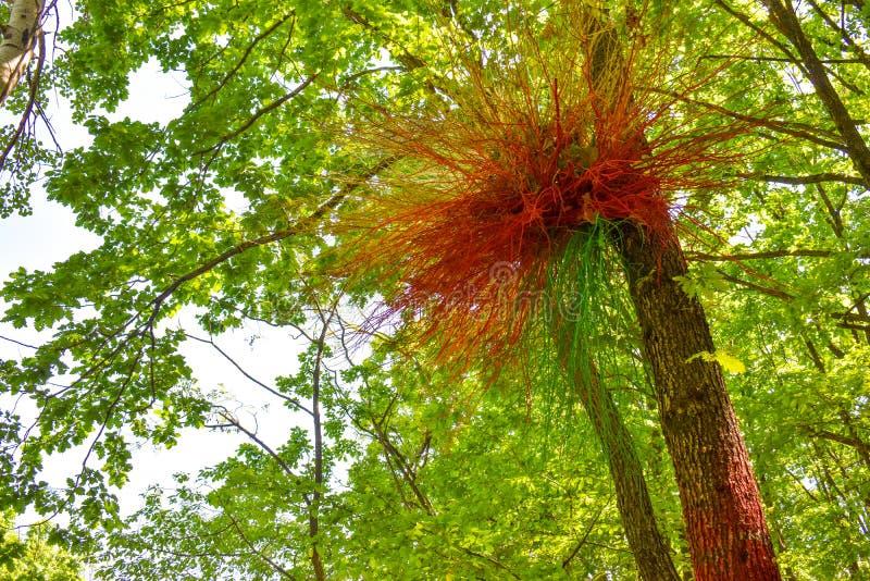 Färgrikt rede på det målade trädet i den färgrika skogen eller Padurea Colorata från Poienari, Rumänien arkivbild