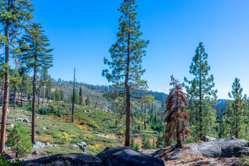 F?rgrikt s?rjer i Oktober i Yosemite fotografering för bildbyråer