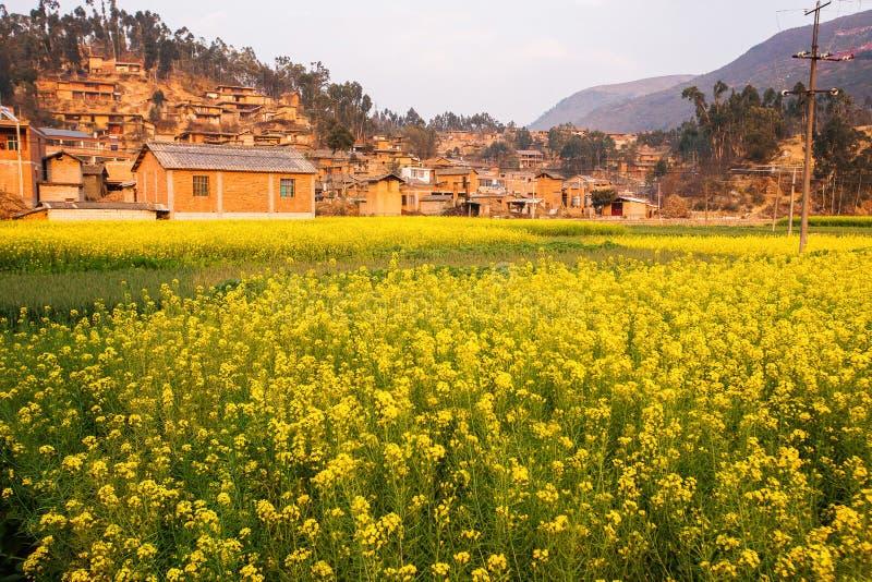 Färgrikt sceniskt landskap av att blomma det senapsgula fältet och den gamla charmiga kinesiska byn Gula blommor blommar fullstän fotografering för bildbyråer