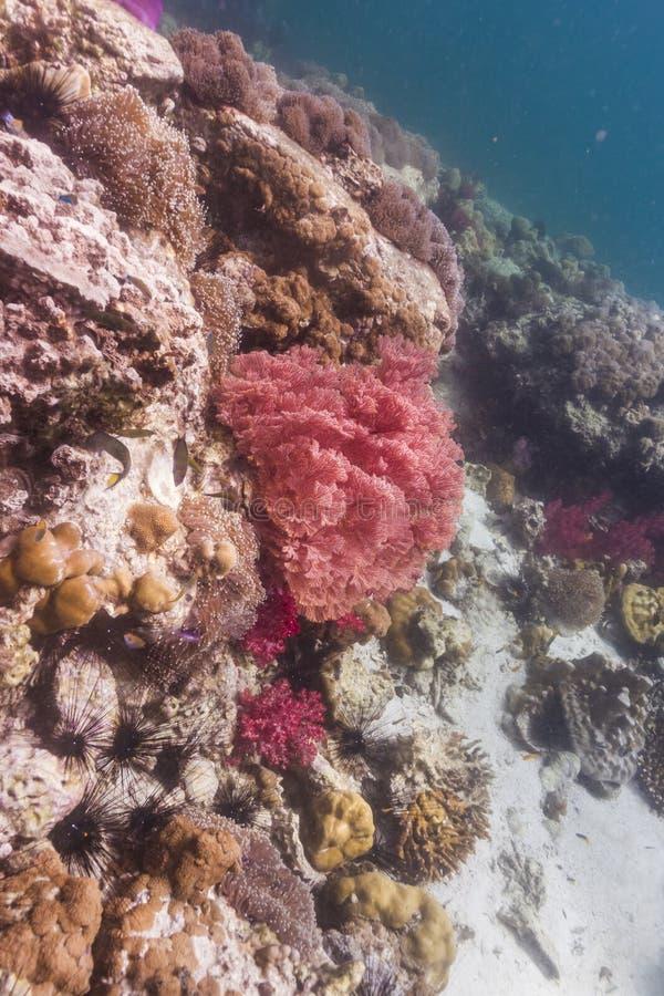 Färgrikt seafan på den Lipe ön arkivbilder