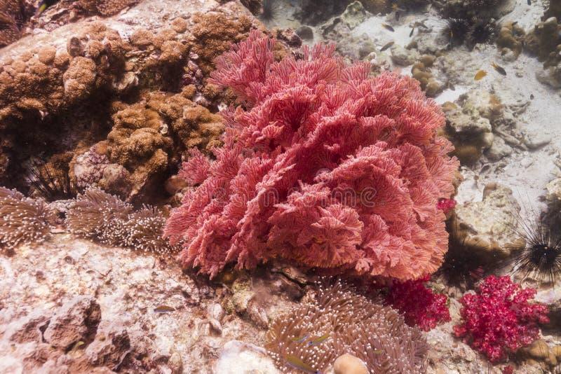 Färgrikt seafan på den Lipe ön arkivbild