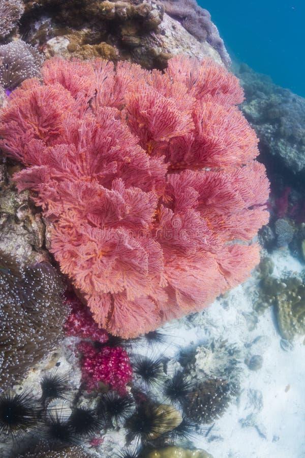 Färgrikt seafan på den Lipe ön arkivfoto