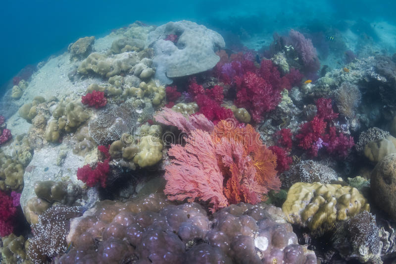 Färgrikt seafan på den Lipe ön royaltyfri fotografi