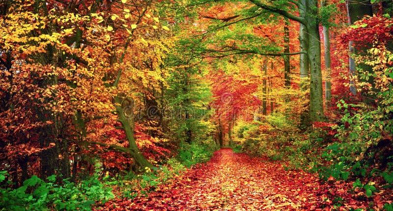 Färgrikt skoglandskap i höst royaltyfria bilder