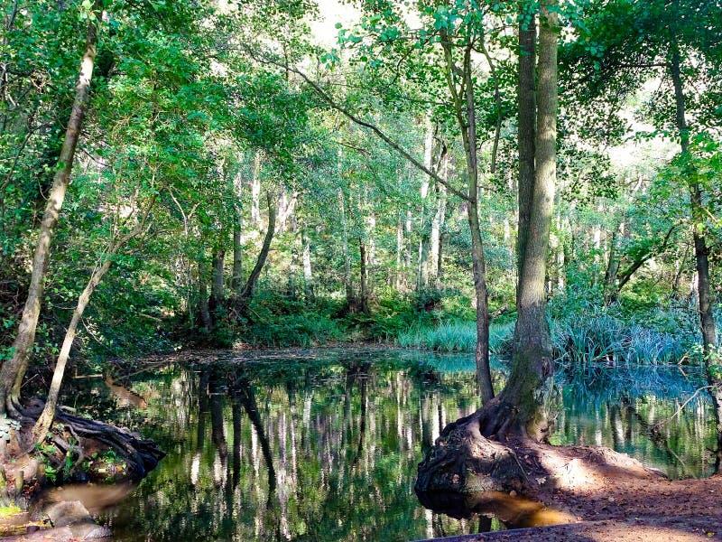 Färgrikt skogsmarkdamm som reflekterar träden över arkivfoto