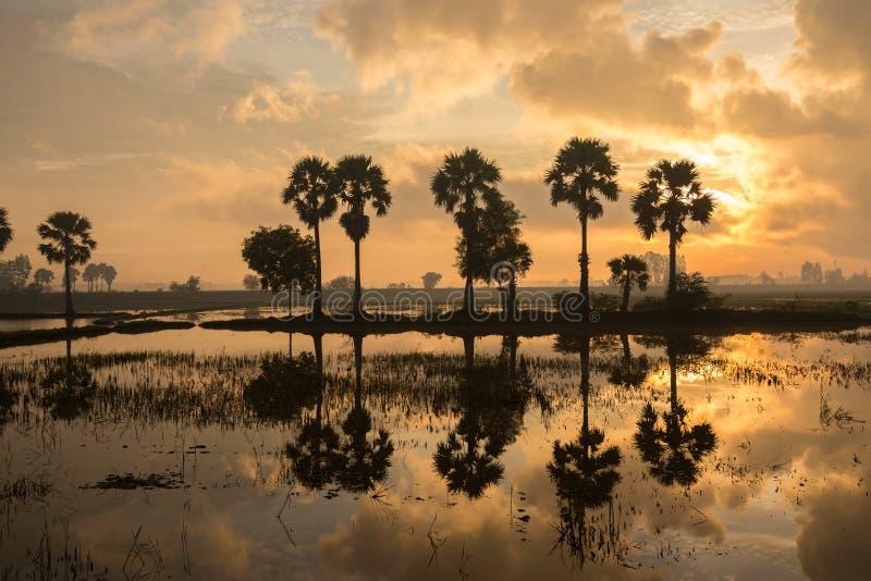 Färgrikt soluppgånglandskap med konturer av palmträd arkivbilder