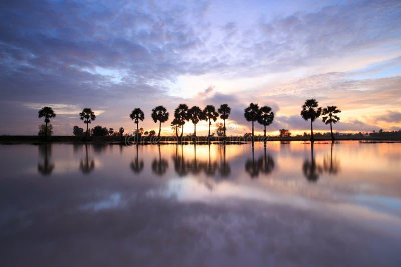 Färgrikt soluppgånglandskap med konturer av palmträd royaltyfri foto