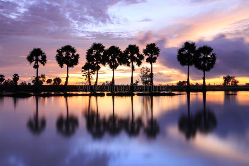 Färgrikt soluppgånglandskap med konturer av palmträd royaltyfri fotografi