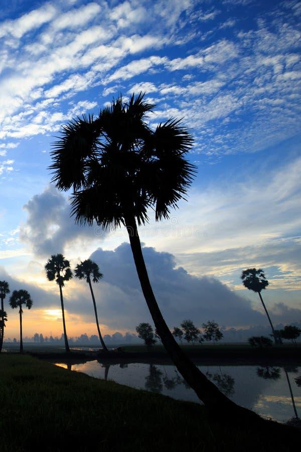 Färgrikt soluppgånglandskap med konturer av palmträd arkivbild