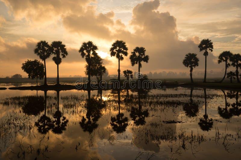 Färgrikt soluppgånglandskap med konturer av palmträd royaltyfria foton